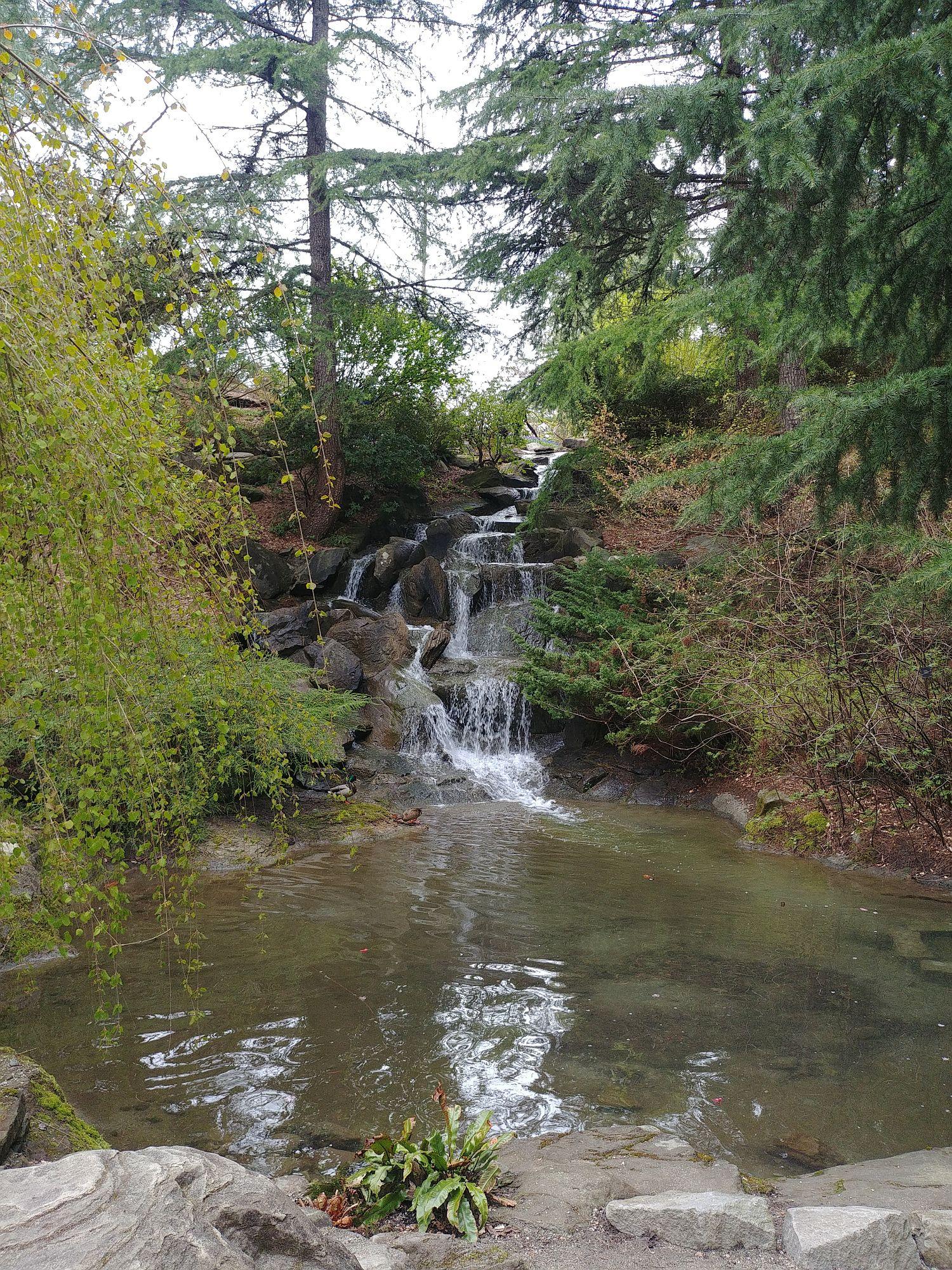 Botanic Gardens - 17 - Waterfalls