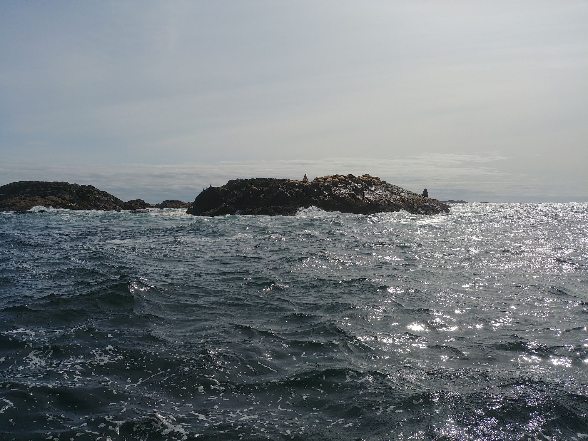Whale watching - 04